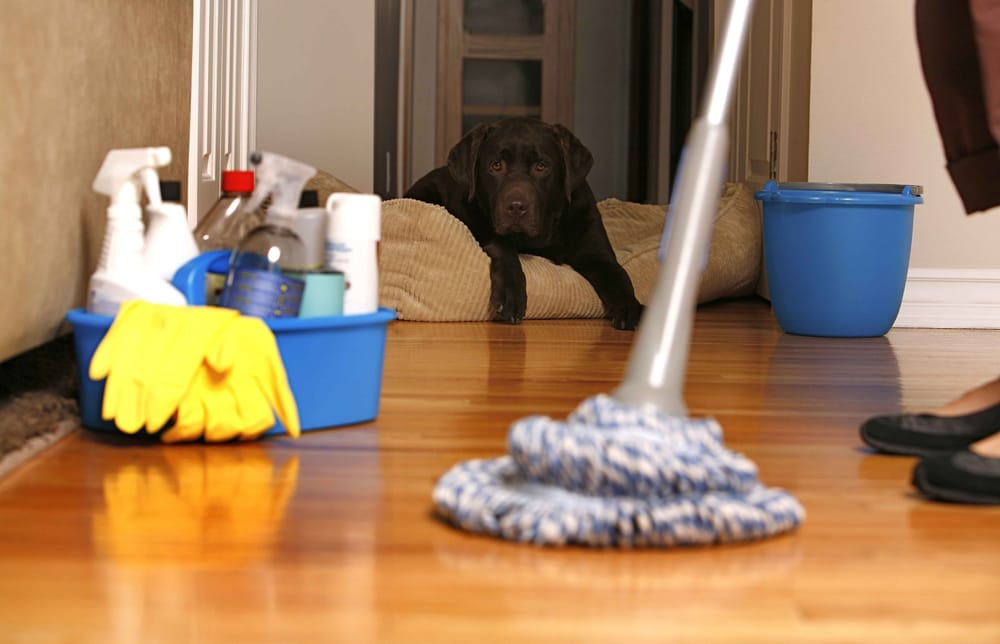 Amazon House Cleaning and Maid Service Offers